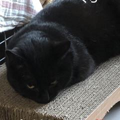 空/めん/猫/にこ/くろ/黒猫 おはようございます☀ 空は晴れてます😊 …(4枚目)
