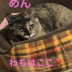 朝ご飯/にこ/めん/猫/くろ/黒猫/... おはようございます😊 なんかどんよりした…(4枚目)