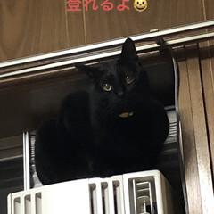 黒猫/にこ にこの特集です。 (2枚目)