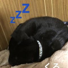 親子/猫飼いのしあわせ/癒し/くろ/黒猫/めん/... 毎晩のようにくろが寝てるところをめんは無…