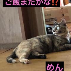 晩ご飯/めん/くろ/にこ/黒猫/癒し/... 今日も一日お疲れ様です。まだ暑いような少…