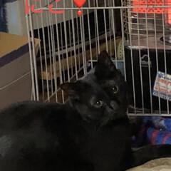 朝ご飯/猫/めん/黒猫/くろ/にこ 今朝も冷えますね。 猫さまたちそれぞれの…(7枚目)