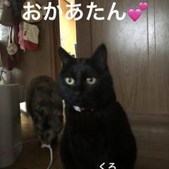 めん/猫/にこ/くろ/黒猫 こんばんはです。今日も一日お疲れ様です。…(1枚目)