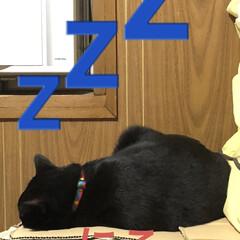 黒猫/にこ/くろ/猫/めん/癒し/... めんが唸るからにこは座布団タワーのふもと…