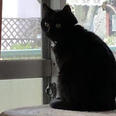 朝ご飯/猫/めん/黒猫/くろ/にこ 今朝も冷えますね。 猫さまたちそれぞれの…(9枚目)
