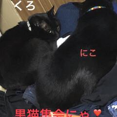 朝ご飯/にこ/めん/猫/くろ/黒猫/... おはようございます😊 なんかどんよりした…(3枚目)