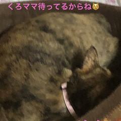 晩ご飯/猫飼さんのしあわせ/黒猫/くろ/猫/めん/... 今日も一日お疲れ様でした。 今日は暑かっ…(4枚目)