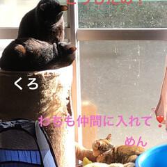 晩ご飯/くろ/にこ/黒猫/猫/めん/... 今日も一日お疲れ様です。普段散らかってる…(1枚目)
