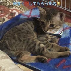 ルーク/癒し/猫飼いのしあわせ 今、ルークくんの里親さんからお手紙来まし…(2枚目)