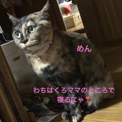 紫芋/庭/ルーク/くろ/にこ/黒猫/... おはようございます。天気のせいかなんとな…(5枚目)
