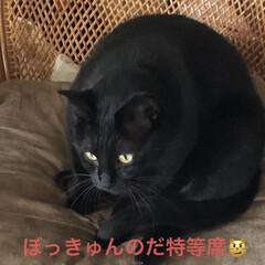 めん/猫/にこ/くろ/黒猫 昨夜明日はリビング掃除しようと決めてたの…(8枚目)