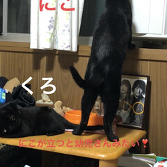 黒猫/にこ/癒し/猫飼いのしあわせ 穏やかなにこは本当に猫なのか?と思うこと…