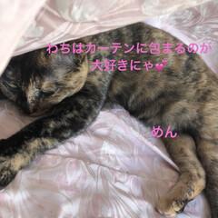 晩ご飯/黒猫/くろ/にこ/猫/めん こんばんはです。晩ご飯は女子飯。ズッキー…(4枚目)