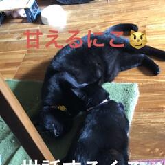 めん/猫/にこ/くろ/黒猫 昨夜明日はリビング掃除しようと決めてたの…(7枚目)