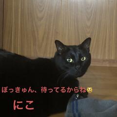 晩ご飯/猫/めん/にこ/くろ/黒猫 こんばんはです。 今日も一日お疲れ様です…(4枚目)