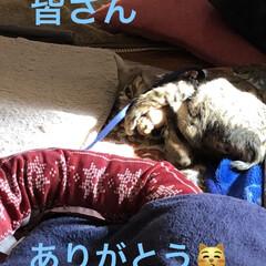 巣立ち/癒し/猫飼いのしあわせ/猫/ちび 決まりました❣️ちびが新しい家族の元へ巣…