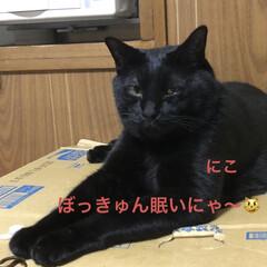 めん/猫/にこ/くろ/黒猫 こんばんはです。 ただ今猫さまたちは寝室…(4枚目)