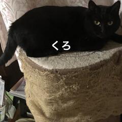 晩ご飯/黒猫/くろ/にこ/猫/めん こんばんはです。 今日も一日お疲れ様です…(5枚目)