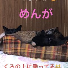 めん/猫/くろ/にこ/黒猫/癒し/... こんばんは。 今日も一日お疲れ様です。 …(3枚目)