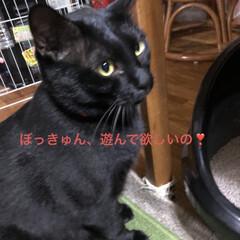 にこ/黒猫/癒し/猫飼いのしあわせ いつも穏やかで優しいにこはすっかりお兄ち…(1枚目)