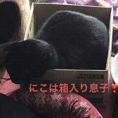 めん/猫/くろ/にこ/黒猫/癒し/... お昼日が陰ったから寒くなってきたなぁと思…(3枚目)