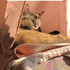 空/朝ご飯/めん/くろ/猫/にこ/... おはようございます。今朝は何だか眠くて1…(4枚目)