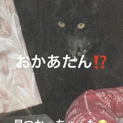 朝ご飯/空/黒猫/くろ/にこ/猫/... おはようございます☀ 良いお天気です。日…(5枚目)