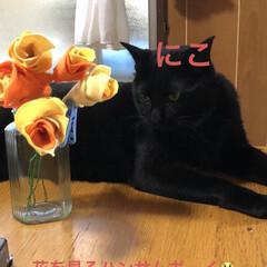 にこ/黒猫/フエルト/癒し/猫飼のしあわせ 今日はにこがべったりです。ずーっとそばに…