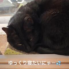 空/朝ご飯/めん/くろ/猫/にこ/... おはようございます。今朝は何だか眠くて1…(6枚目)
