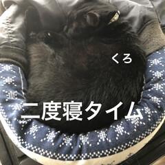 朝ご飯/めん/猫/にこ/くろ/黒猫 おはようございます☀ 良いお天気です。朝…(6枚目)