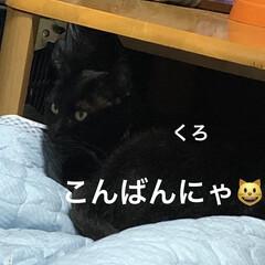 めん/猫/にこ/くろ/黒猫 こんばんはです。 ただ今猫さまたちは寝室…(1枚目)