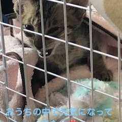 ちび/癒し/猫飼いのしあわせ/猫 先週、娘が保護した仔猫ちゃん。 排泄はす…(2枚目)