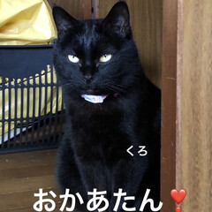 めん/猫/にこ/くろ/黒猫 昨夜明日はリビング掃除しようと決めてたの…(1枚目)