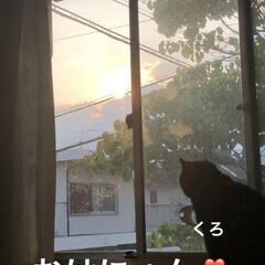 空/めん/猫/黒猫/にこ/くろ あらためておはようございます☀。 良いお…(1枚目)