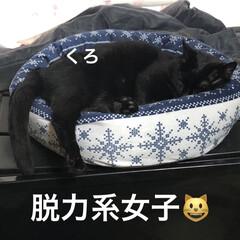 晩ご飯/黒猫/くろ/にこ/めん/猫 こんばんはです。今日も猫たちは元気に過ご…(7枚目)