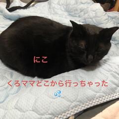 めん/猫/くろ/にこ/黒猫/空 おはようございます 朝焼け綺麗でした❣️…(5枚目)