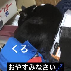 晩ご飯/猫飼さんのしあわせ/黒猫/くろ/猫/めん/... 今日も一日お疲れ様でした。 今日は暑かっ…(3枚目)