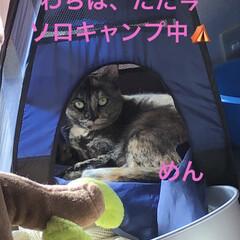 猫/めん/黒猫/くろ/にこ/癒し/... 午前中は静かに寝ていた猫たち。 お昼ご飯…(2枚目)