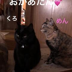 お昼ご飯/にこ/くろ/黒猫/めん/猫/... 少し遅めの昼ごはん。袋ラーメンに残り物乗…(4枚目)