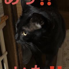 にこ/黒猫/癒し/猫飼いのしあわせ いつも穏やかで優しいにこはすっかりお兄ち…(4枚目)