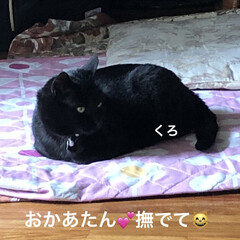 お昼ご飯/めん/猫/にこ/くろ/黒猫 曇り空ですが少し気温上がってきたかな? …(2枚目)