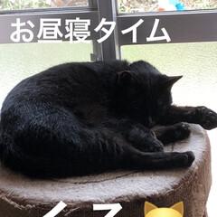 猫/めん/黒猫/くろ/にこ/癒し/... うちの猫様お昼寝してるところです。 寝方…