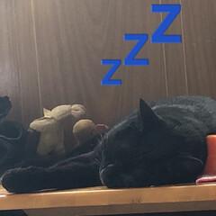 猫飼いのしあわせ/癒し/めん/にこ/黒猫/空/... ギックリ腰で動けない💦 布団から見える景…(2枚目)