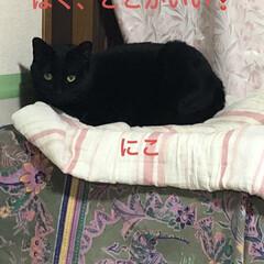 晩ご飯/黒猫/くろ/にこ/猫/めん 今日も一日お疲れ様です。 晩ご飯は煮しめ…(6枚目)