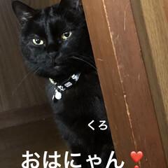 朝ご飯/空/黒猫/くろ/にこ/猫/... おはようございます☀ 良いお天気です。日…(2枚目)