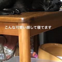 にこ/黒猫/めん/猫/癒し/猫飼のしあわせ 連投すみません。猫たちに朝ご飯あげてそこ…(3枚目)