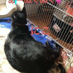 ストーブ/にこ/くろ/黒猫/めん/猫 とりあえずゆっくりしようとリビングのスト…(4枚目)