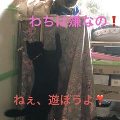 空/マスク/お花/くろ/にこ/黒猫/... おはようございます。今朝はまだ曇ってまし…(8枚目)
