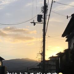 野菜室/朝ご飯/猫飼いのしあわせ/癒し/黒猫/めん/... おはようございます😊 早朝はやっぱり冷え…