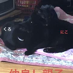 黒猫/くろ/にこ/猫/めん 今日の猫さまたち😼😺😸 やっぱりわかるん…(7枚目)